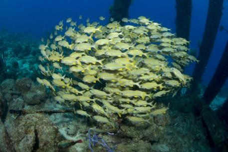 School-of-Fish-457x305.jpg